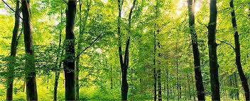 aix les bains ambiance bois