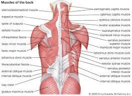 aix les bains musculation du dos